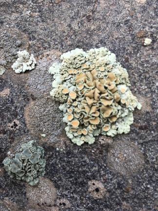 lichen biome maymester '18