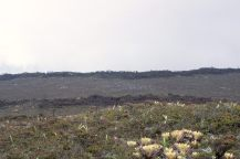 summit bogs